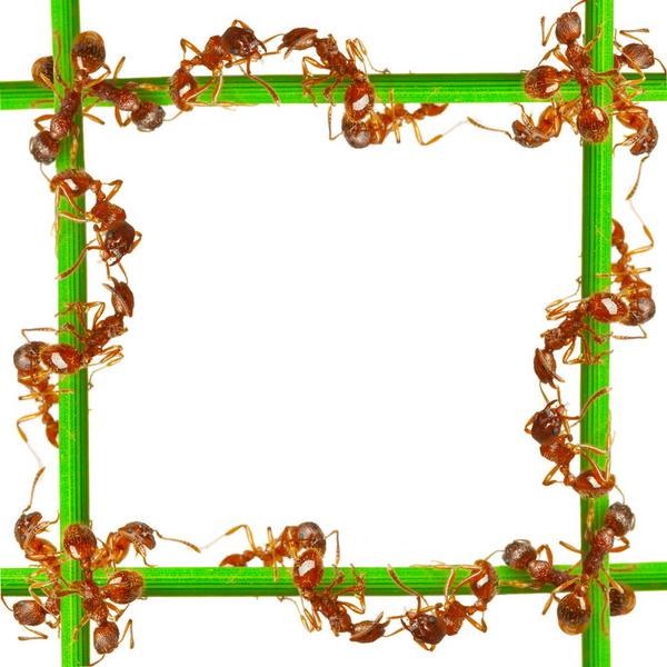 Як позбутися від мурашок - правила і засоби